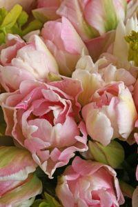 2 tulips
