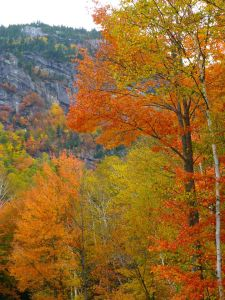 Fall leaves_cliff