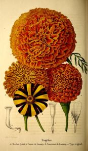 3orange flowers