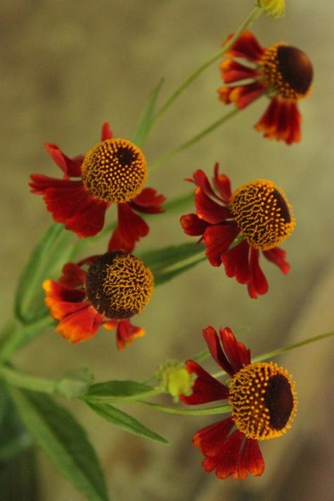 6rust flowers