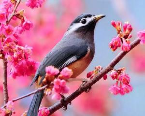 bird_pink flowers