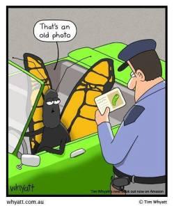 butterfly joke