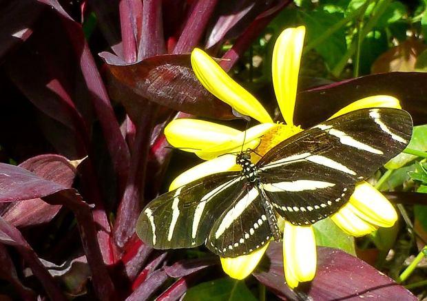 Butterfly_flowers 3_Tom Seliskar