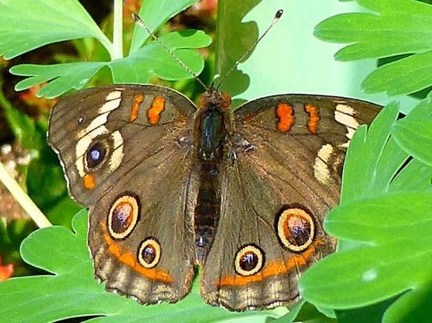 butterfly_leaf 2_Tom Seliskar