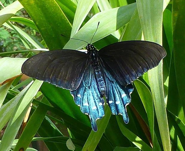 butterfly_leaf 5_Tom Seliskar