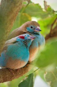 cuddly birds