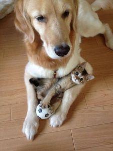dog_kitten