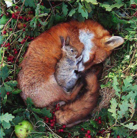 fox_rabbit