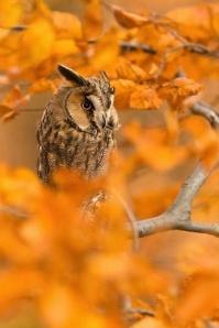 owl_fall