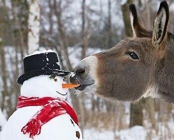 donkey_snowman
