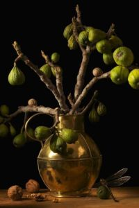 FIGS, AFTER G.F. by Paulette Tavormina