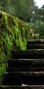 mossy stairs