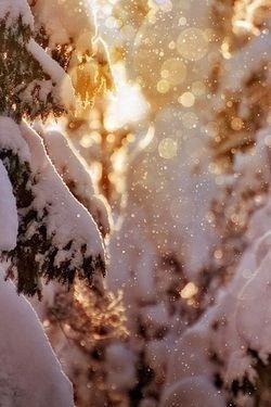 orbs_snowy trees