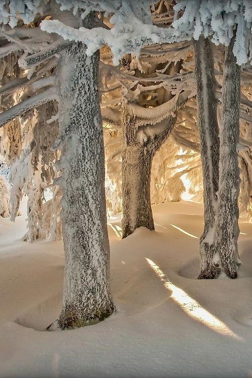 snowy underneath