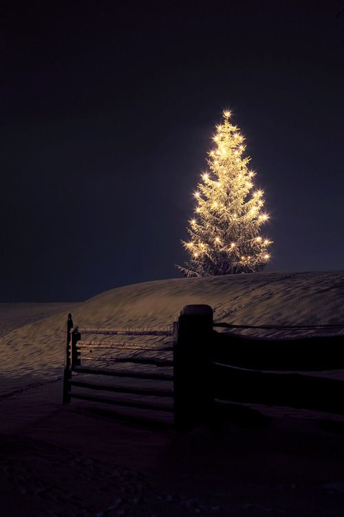 white lights tree