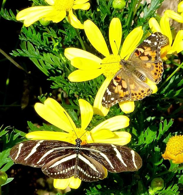 Butterflies with Yellow Flowers by Tom Seliskar