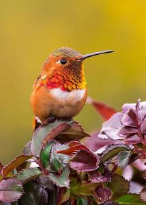 rufous-your-feathers-monique-dao