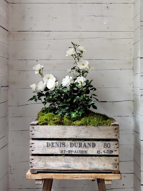 wooden box_roses