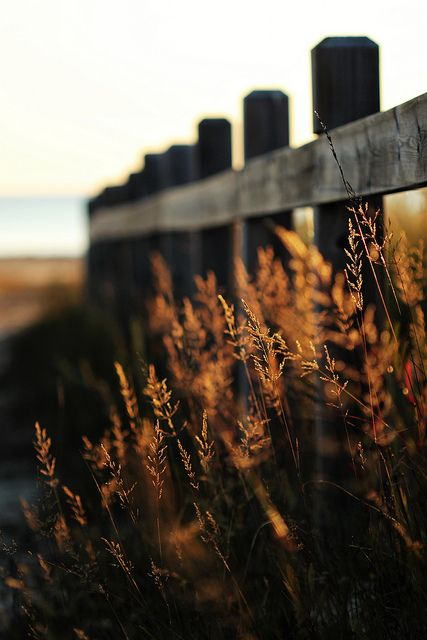 fence_grasses