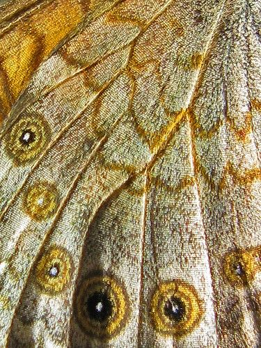 gold butterfly wing