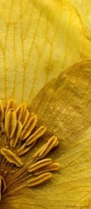 gold flower_detail