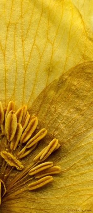 gold flower_detail