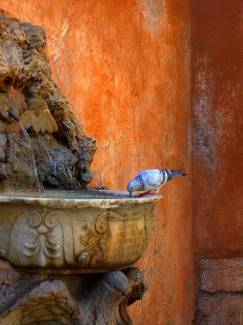 Pigeon at fountain by Marite2007 on Flickr