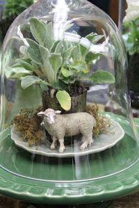 sheep cloche