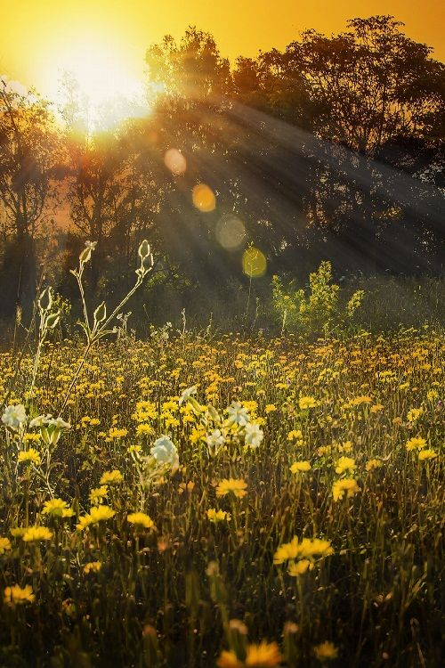 wildflowers_sunlight