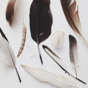 brown and white feathers