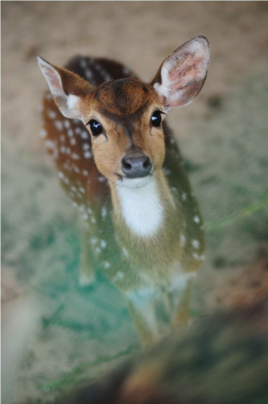 Bambi by Sham Jolimie on Fivehundredpx