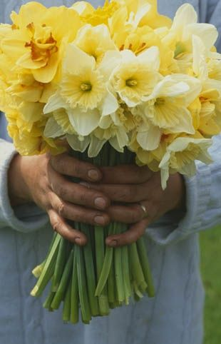 Bloemschikken | Flowers arranging, Boeket Narcissen | Bouquet Narcissus, NARCIS