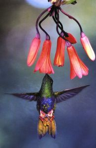 humming bird_flower
