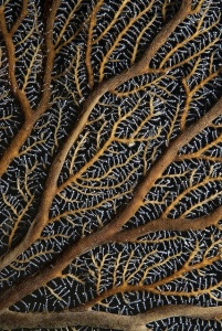 Hydroid Detail with Squid - Jervis Bay by Rowland Cain