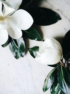 Magnolias_Amber wilson