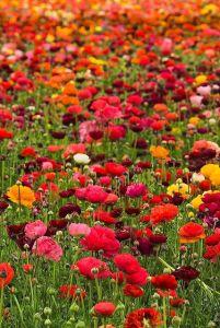 multi wildflowers