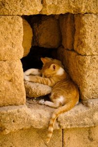 orange cat_orange stone