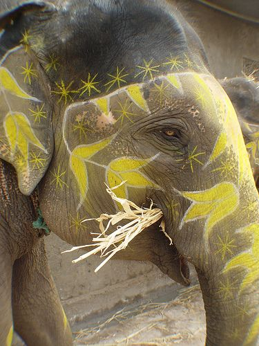 Painted elephant, Jaipur by Peter Garnhum