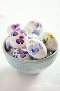 pansy eggs