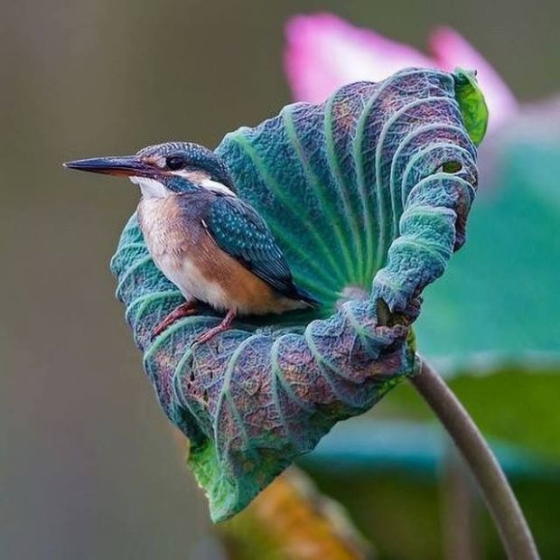 purple and blue bird and flower