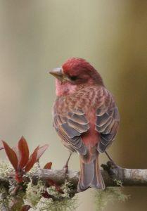 red_gray bird on branch