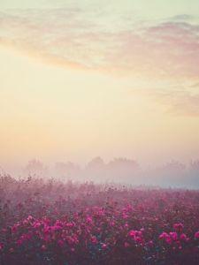 shades-of-pink1