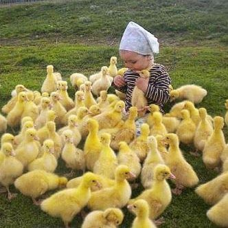 lil girl and ducklings