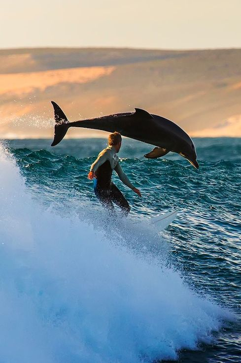 surfer_dolphin