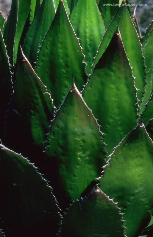 vibrant green succulent