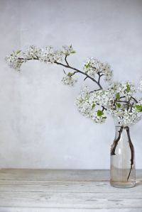 white blooming branch