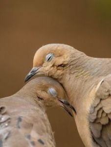 bird togetherness