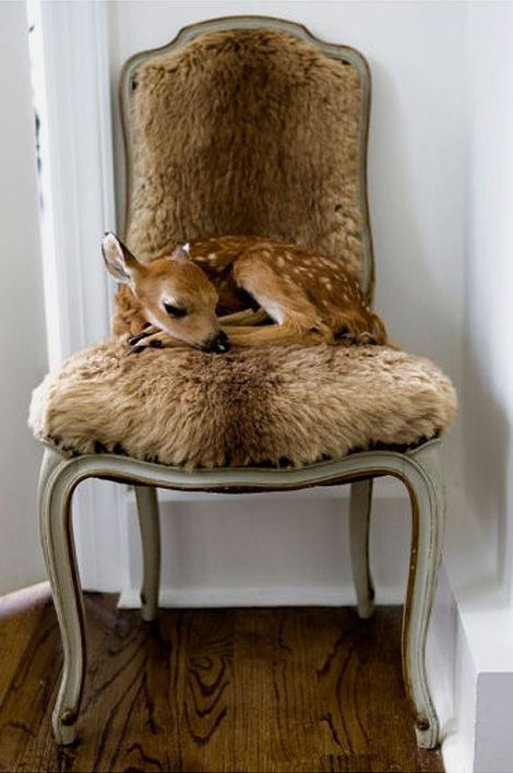 deer_chair