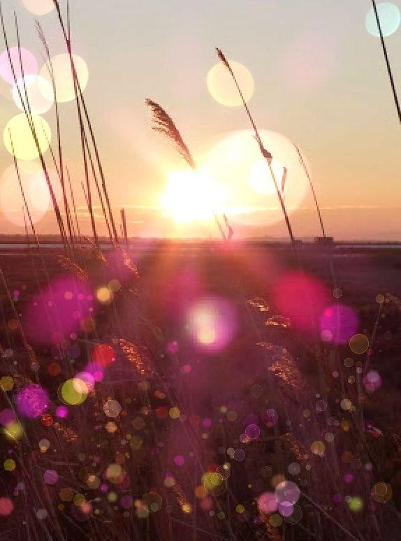 lavendar orbs