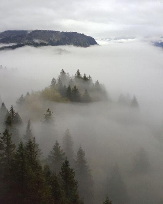 misty greens